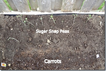 Planting 04282012-7