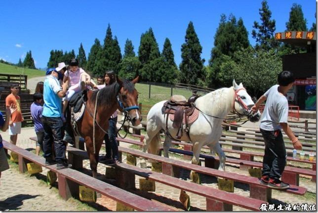在綿羊秀開始前,青青草原的觀眾席可以付費騎馬繞行觀眾席一圈。
