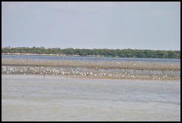 19 - wading birds take off