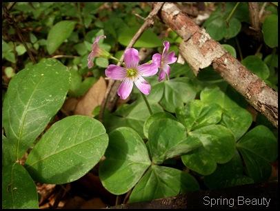 Bolen Bluff Trail-Spring Equinox 035