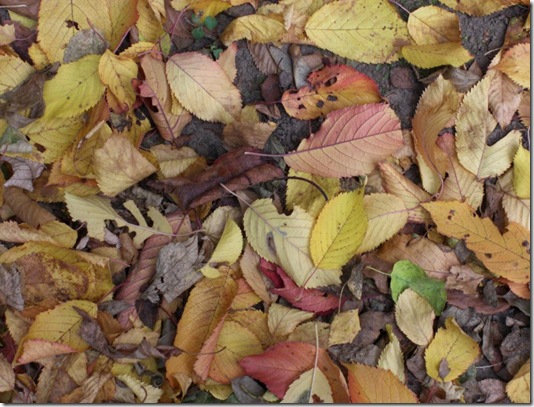 Leaves_Stock_1_by_qroot_stock