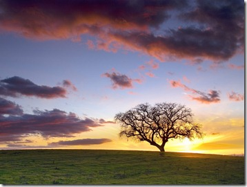Lone Tree Hills, Paso Robles, California