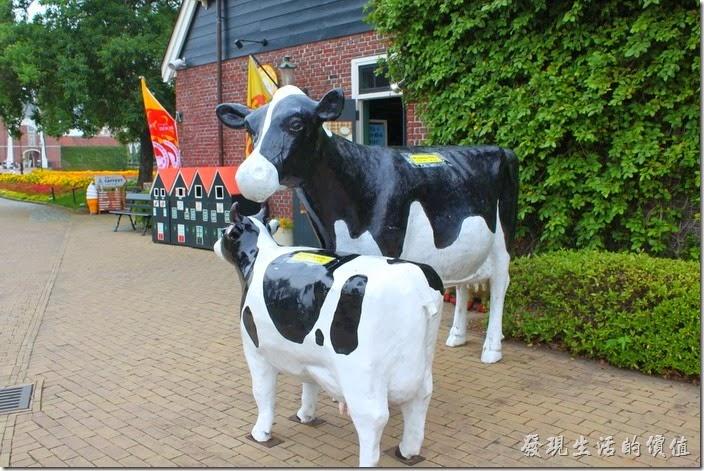 日本北九州-豪斯登堡。發現一間商店,外邊養了兩隻乳牛模型。