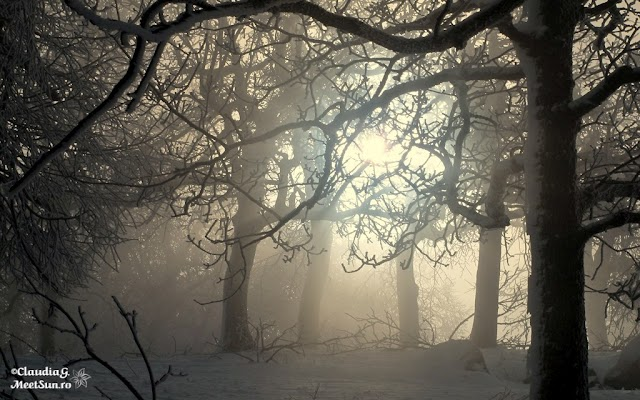 Macin-iarna-24_rw.jpg