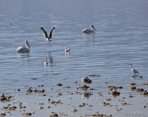 23. birds at the salton sea-gusto