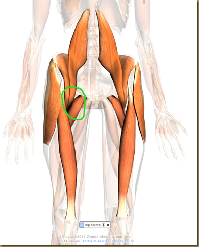 hip flexor 2