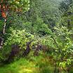 norwegia2012_73.jpg