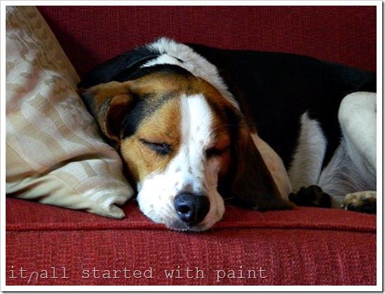 Ernie Sleeping (2)