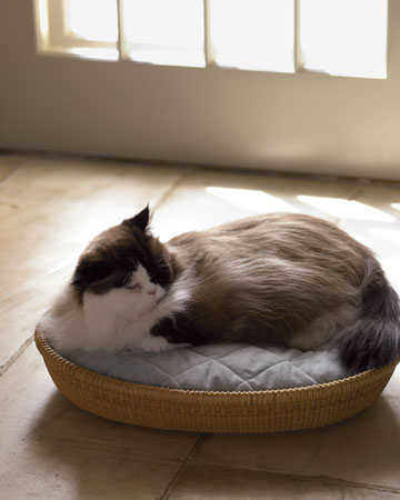 This oval Nantucket basket makes the perfect cat bed. (Martha Stewart Living)