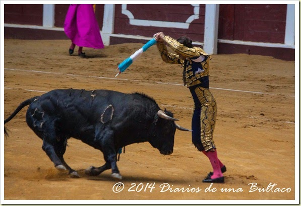 Toros 2014 (1)-6
