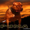 puma1_15m.jpg