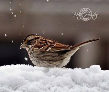 fat-sparrow
