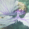Buck Island Reef - IMGP1061.JPG