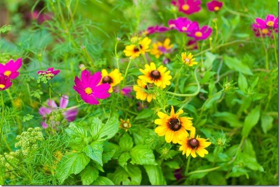 PNP garden-041-2
