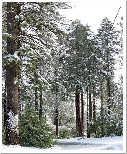 120413_snow8