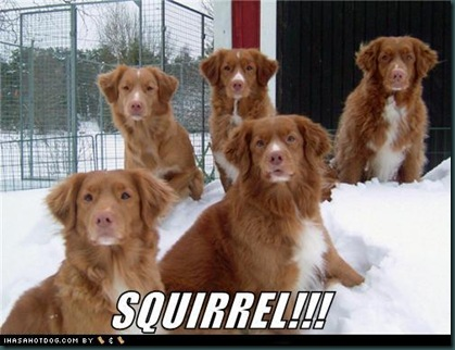 funny-dog-pictures-squirrel
