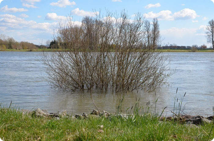 Ostersonntaghunderunde (17) am Rhein