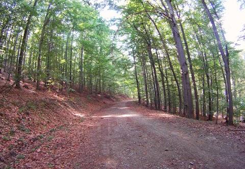 Luxusná lesná cesta (Jahodná - Opátka)