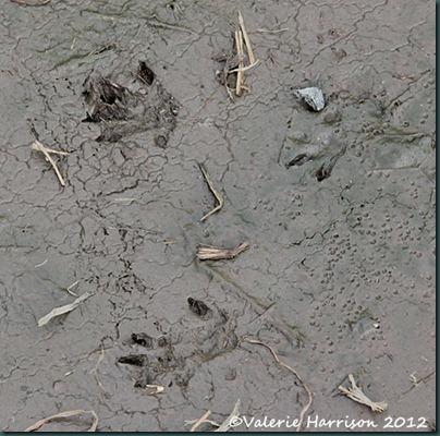 16-mammal-prints