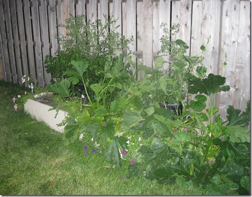 Garden July 24 (5)