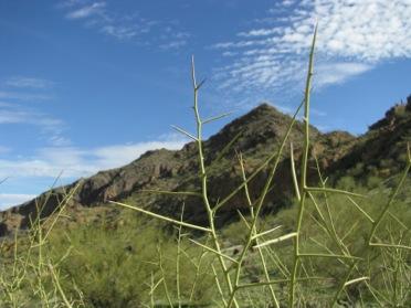 Hikingthebigloophike-11-2012-11-13-21-45.jpg