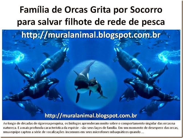 Família de Orcas Grita por Socorro