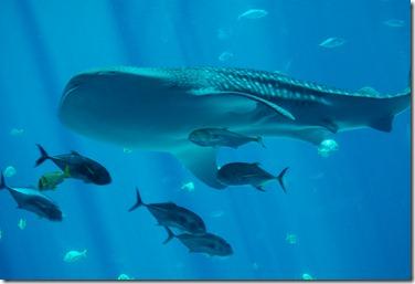 ATL aquarium 051