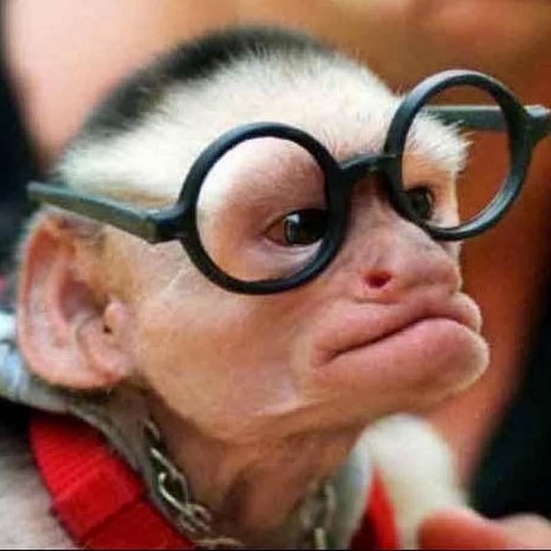Jika Monyet Menjadi Ilmuwan