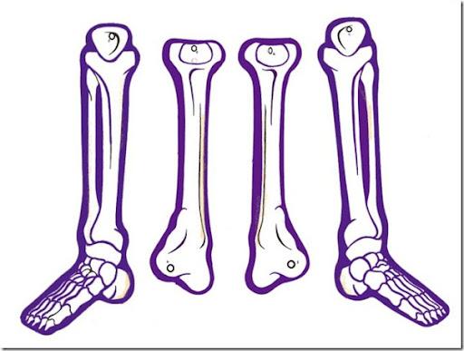 Esqueleto humano articulado para armar - Imagui