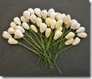 ScrapEmporium_Flores_Tulipa_Marfim_WOC_fs00012