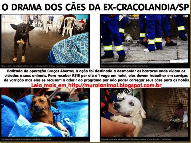 caes_cracolandia4