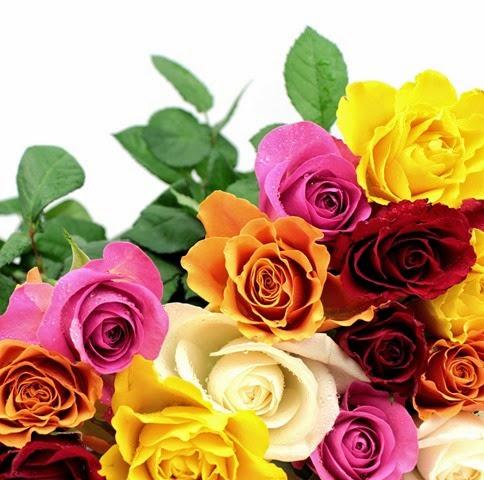 rosas cores lindas