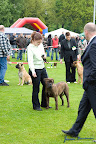 20100513-Bullmastiff-Clubmatch_30925.jpg