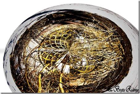 hdr_20120210_birdstable1