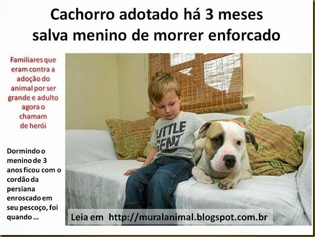 Cachorro adotado ha 3 meses