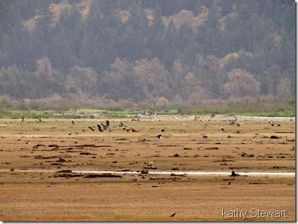 Flats October 18, 2012