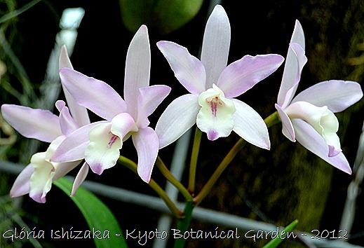 Glória Ishizaka -   Kyoto Botanical Garden 2012 - 26