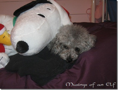 Navi and Snoopy