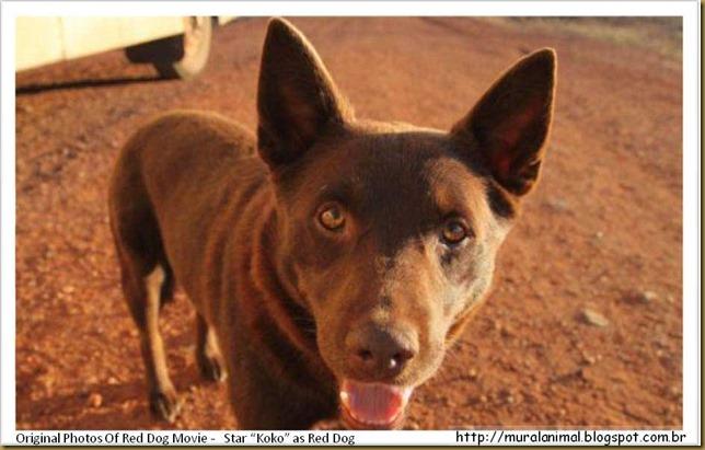 reddog-(6)