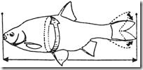 Mäta fisk