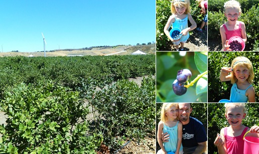 View blueberry farm 2