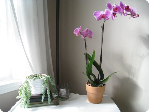 orchid1_athomewithh