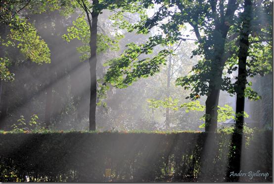 1 Sun Rays