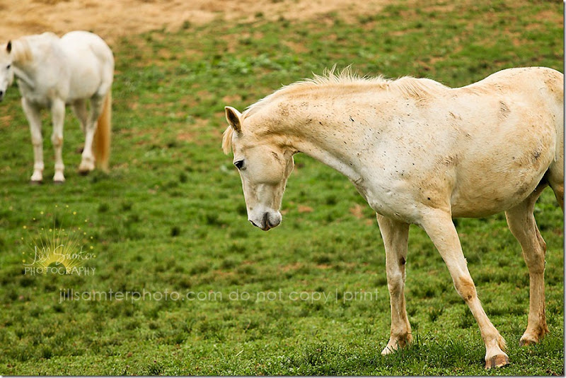 horses-5500