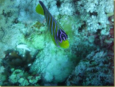 LBS Fish Nemo