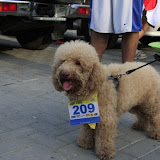 Pet Express Doggie Run 2012 Philippines. Jpg (261).JPG
