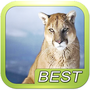 how to download mountain lion windows computer