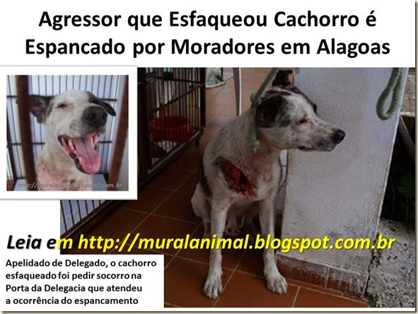 Agressor que Esfaqueou Cachorro é Espancado por Moradores