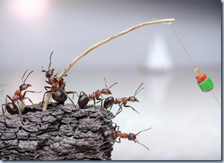 fantasy-world-of-ants5