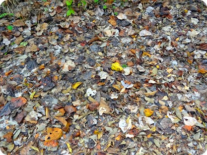 fall leaves in TX